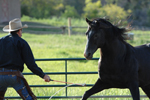 horse training articles