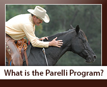 Find out more about the Parelli Horse Training method